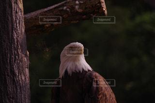 近くに鳥のアップの写真・画像素材[1079190]