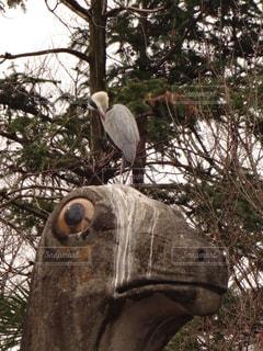 鳥と汚された石像の写真・画像素材[1079232]