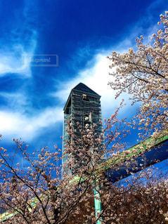 建物を背景に桜の花の写真・画像素材[1088161]