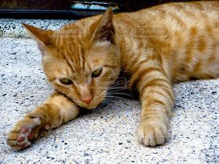 地面に横になっている猫の写真・画像素材[1108087]