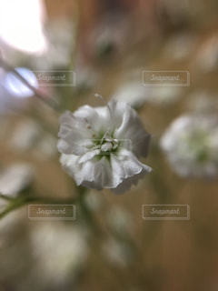 近くの花のアップの写真・画像素材[1108113]