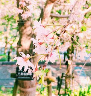 近くの花のアップの写真・画像素材[1116904]