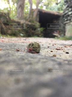 森に横たわる小さな石の写真・画像素材[1116926]