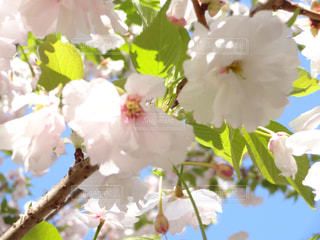 近くの花のアップの写真・画像素材[1117040]