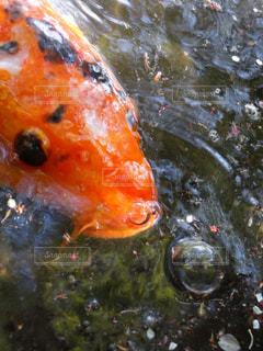 水面下を泳ぐ魚の写真・画像素材[1117090]