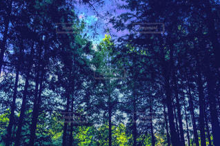 幻想的な森の写真・画像素材[832136]