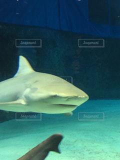 魚の写真・画像素材[328249]