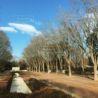 公園の写真・画像素材[350370]