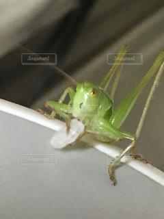 昆虫の写真・画像素材[328448]