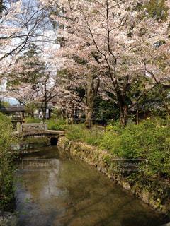 春の写真・画像素材[328984]