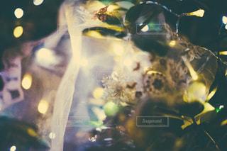 枯れ葉の写真・画像素材[9420]