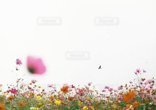 自然の写真・画像素材[9472]