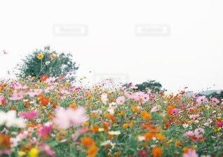 自然の写真・画像素材[9471]