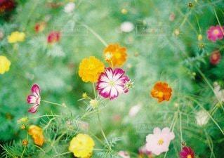 自然の写真・画像素材[9470]