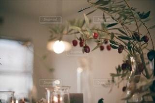 植物 - No.9462