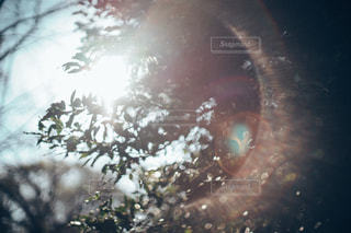 木の写真・画像素材[9459]