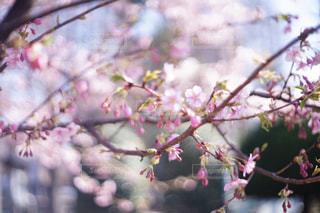 花の写真・画像素材[9457]
