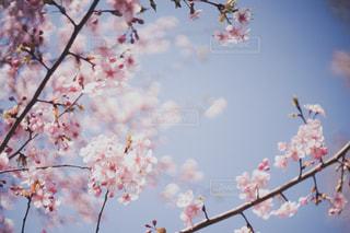 花の写真・画像素材[9455]