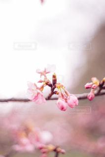 花の写真・画像素材[9447]