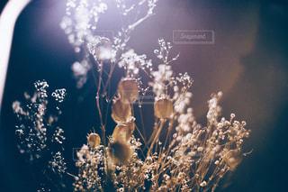 花の写真・画像素材[9445]