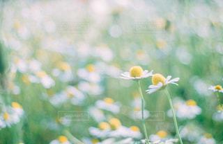 自然の写真・画像素材[9427]