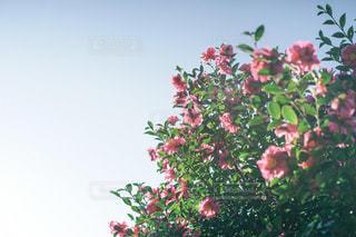 自然の写真・画像素材[9423]