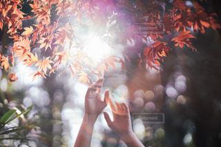 木の写真・画像素材[9421]