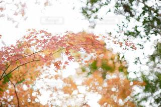 自然の写真・画像素材[9414]