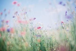 自然の写真・画像素材[9307]