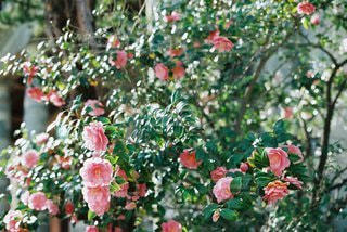 花の写真・画像素材[9305]
