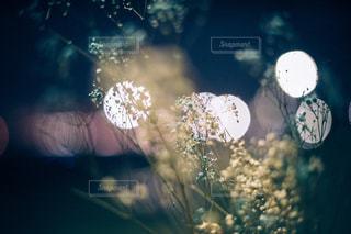 花の写真・画像素材[9296]