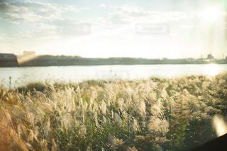 風景の写真・画像素材[9294]
