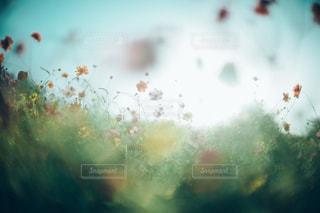 自然の写真・画像素材[9290]