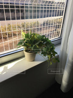 窓際 グリーン - No.329023