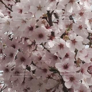 花 - No.329045