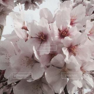 花の写真・画像素材[329046]