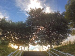 階段の写真・画像素材[329194]