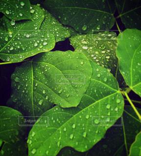 雨の写真・画像素材[329274]
