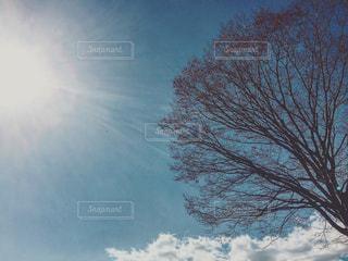 空の写真・画像素材[360627]