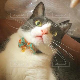猫の写真・画像素材[664865]