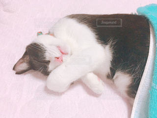 猫の写真・画像素材[664867]