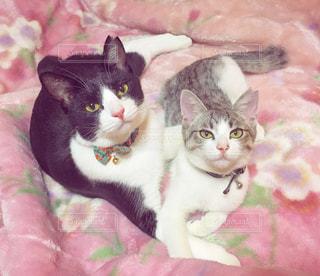 猫の写真・画像素材[783088]