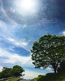 空の木の写真・画像素材[812842]
