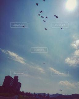 空飛ぶ鳥達の写真・画像素材[813079]
