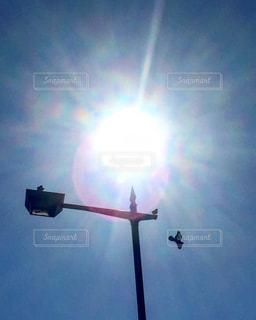 空を飛んでいる光と鳥の写真・画像素材[815803]