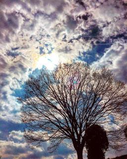 空に映える樹木の写真・画像素材[815804]