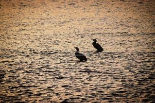 川でたたずむ二羽の鳥の写真・画像素材[815806]