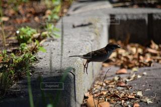 跳ぶ?鳥の写真・画像素材[816261]