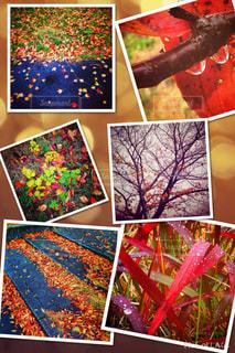 色とりどりの秋の写真・画像素材[816265]