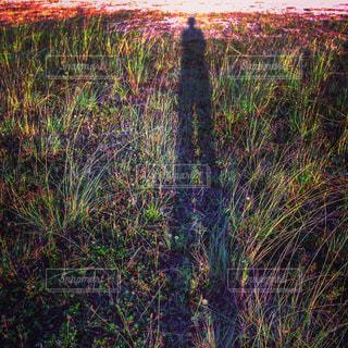 足の長い影の写真・画像素材[822543]